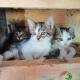 Haus Primosch - Unsere Katzen am Bauernhof, da waren sie noch kleine Kätzchen